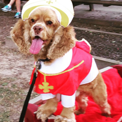 Pope Pup - Cape May Kiwanis 2015 Pet Parade Winner